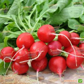 Шахри семена редиса (Hazera)