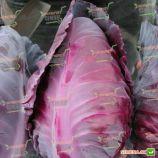 Тинти F1 семена капусты конической средней (Hazera)