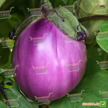 Беата F1 семена баклажана (Semo)