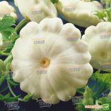Деликатес семена патиссона (Semo)