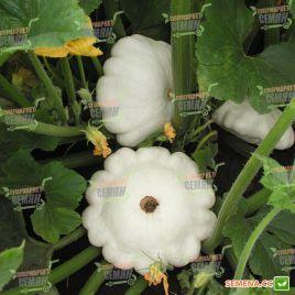 Патинова семена патиссона белого (Semo)