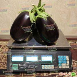 Сандра F1 семена баклажана раннего 600 гр. 15 см овал. (Semo)