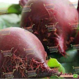 Детройт семена свеклы столовой 90-100 дн. окр. (Sakata)