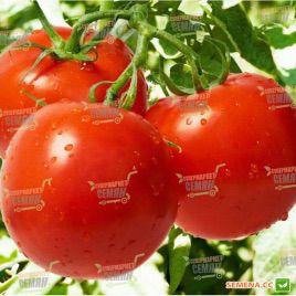 Джампакт F1 семена томата дет (Sakata)