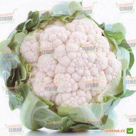Кашмир F1 семена капусты цветной ранней 55-60 дн. 0,7-1,5 кг бел. (Sakata)