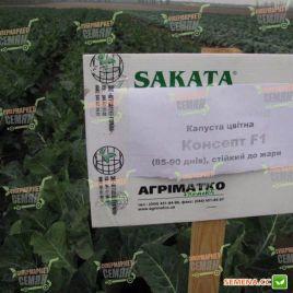 Консепт F1 (Концепт F1) семена капусты цветной средней 85-90 дн. 1,5-2,5 кг бел. (Sakata)