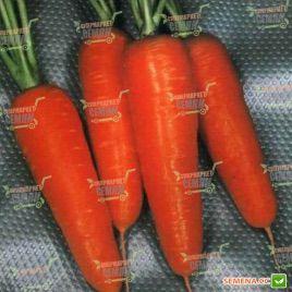 Курода Шантане семена моркови Шантане (Sakata)
