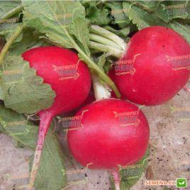 Мисато Ред семена редьки Дайкон (Sakata)