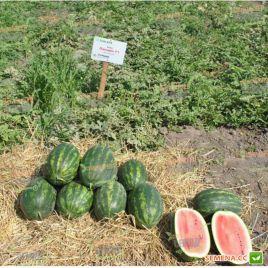 Паладин F1 семена арбуза тип Кримсон Свит раннего 70-75 дней 10-12 кг (Sakata)