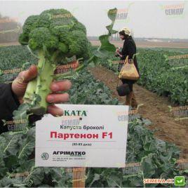 Партенон F1 семена капусты брокколи средней 80-85 дн. 0,4-0,8кг (Sakata)