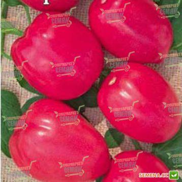 Пинк Пионер F1 семена томата индет слив розового (Sakata)