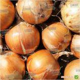 Спениш Медальон F1 семена лука репчатого (Sakata)