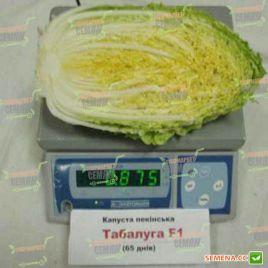 Табалуга F1 семена капусты пекинской средней 60-70 дн. 0,8-2 кг (Sakata)