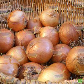 АМG 1095 F1 семена лука репчатого раннего (AMG) СНЯТО С ПРОИЗВОДСТВА