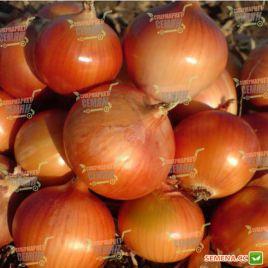 АМG 1115 F1 семена лука репчатого среднего 110-120дн. (AMG) СНЯТО С ПРОИЗВОДСТВА