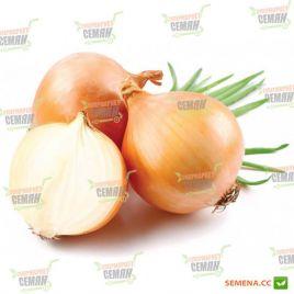 AMG 1125 F1 семена лука репчатого раннего (AMG) СНЯТО С ПРОИЗВОДСТВА