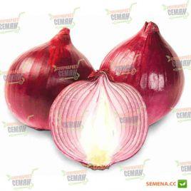 AMG 1220 F1 семена лука репчатого красного среднего (AMG) СНЯТО С ПРОИЗВОДСТВА