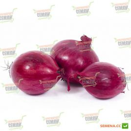 AMG 1295 F1 семена лука репчатого красного раннего (AMG) СНЯТО С ПРОИЗВОДСТВА