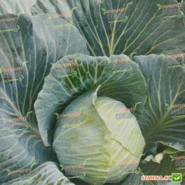AMG 2110 F1 семена капусты б/к среднепоздней 115-120 дней 2,4-3 кг окр. (AMG) СНЯТО С ПРОИЗВОДСТВА