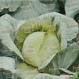 AMG 2121 F1 семена капусты б/к поздней 120-130 дн. 3-4 кг окр. (AMG) СНЯТО С ПРОИЗВОДСТВА