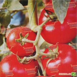 AMG 6105 F1 семена томата дет. раннего окр. 180-200г (AMG) СНЯТО С ПРОИЗВОДСТВА