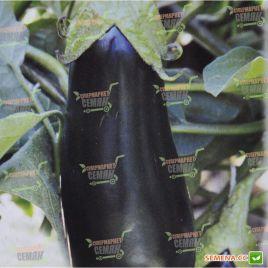 AMG 7051 F1 семена баклажана тип Алмаз раннего 80-85 дн. 200-250 гр. 15-20 см (AMG) СНЯТО С ПРОИЗВОДСТВА