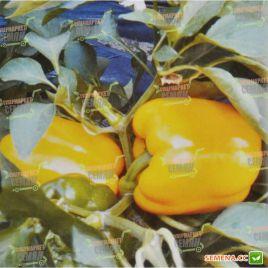AMG 8077 F1 семена перца сладкого раннего 65-70 дн. желт. кубов. (AMG) СНЯТО С ПРОИЗВОДСТВА