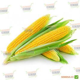 AMG 9075 F1 семена кукурузы сладкой Su ранней 68 дн. 22-24см 14-16р. (AMG) СНЯТО С ПРОИЗВОДСТВА