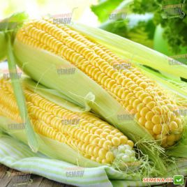 Голд Кроун F1 семена кукурузы суперсладкой Sh2 ранней 78дн. 18-23см 16р. (Dorsing Seeds)