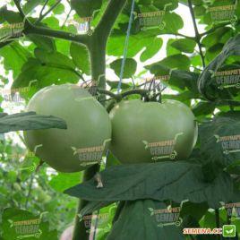 Чероки F1 семена томата индет. раннего 70 дн. окр. до 170-200 гр (Esasem)