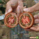 Криспина плюм F1 семена томата индет. (Esasem)