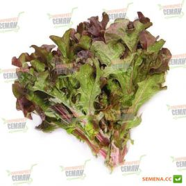 салат листовой дубовый