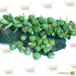 Геркулес семена капусты брюссельской (Euroseeds)