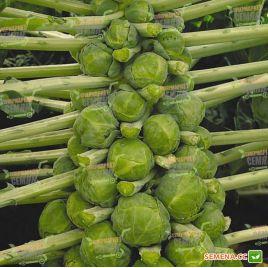Геркулес семена капусты брюссельской среднепоздней (Hortus)