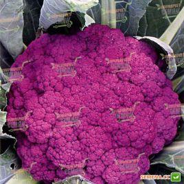 Пурпурная Сицилийская семена капусты цветной (Euroseed)