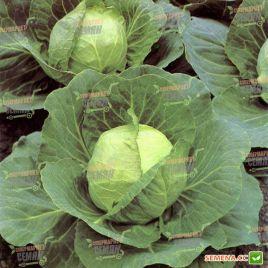 Слава семена капусты б/к среднепоздней 110-115 дн. 3-3,5 кг (Euroseed) НЕТ ТОВАРА