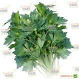 Итальянский Гигант семена петрушки листовой (Griffaton)