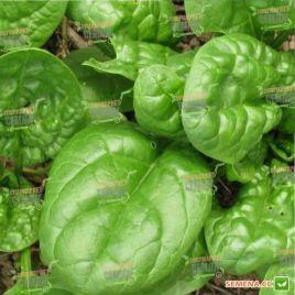 Матадор семена шпината (Griffaton) НЕТ ТОВАРА