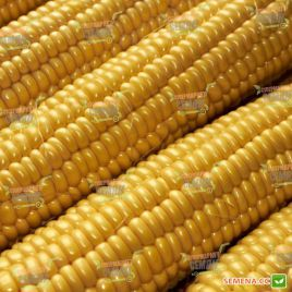 Легаси F1 семена кукурузы сладкой Su средней 85дн 21см 18-20р. (Harris Moran)