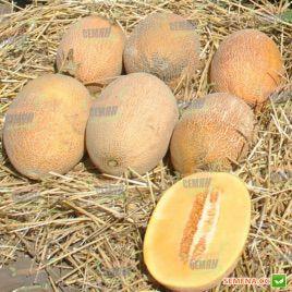 Робаст F1 семена дыни тип Ананас (Hollar Seeds)