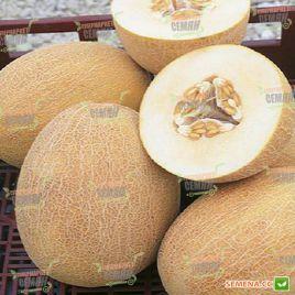 Ананас семена дыни тип Ананас средней 80-90 дн. 1,8-2,5 кг овал. оран./бел. (Hortus)