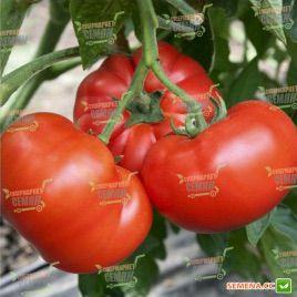 Хомстед семена томата индет. окр. среднеран. 85-95 дн. (Hortus)