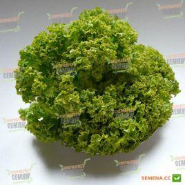 Лолло Бионда семена салата (Hortus)