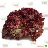 Лолло Росса семена салата красн. (SAIS)
