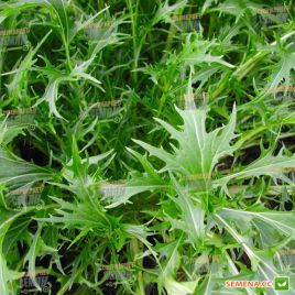 Мизуна зеленая семена салата тип Горчичный (Hortus)