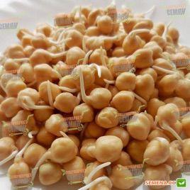 Нут семена (Hortus)