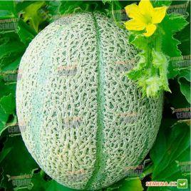 Ортолани семена дыни средней 75-80 дн. 1,6-2 кг овал. зел./оран.-роз. (Hortus)
