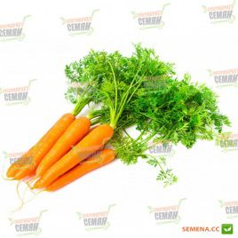 Марс F1 семена моркови среднеспелой (Integra)
