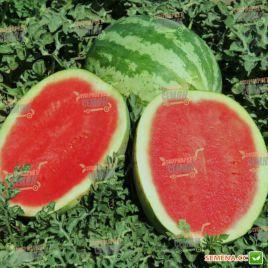 Бонус F1 семена арбуза тип Кримсон Свит раннего 65-78 дней 9-14 кг овал. (May Seeds) НЕТ ТОВАРА