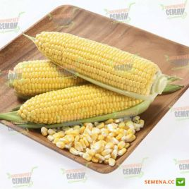 Карамелло F1 семена кукурузы суперсладкой Sh2 ультраранней 59-65дн. 24см (May Seeds)